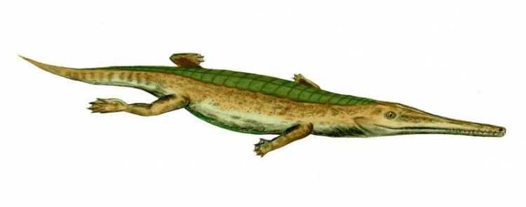 Pelagosaurus