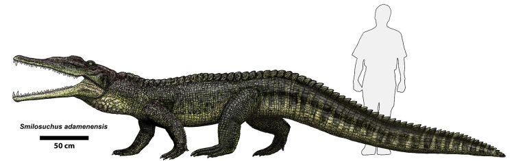 Smilosuchus adamanensis