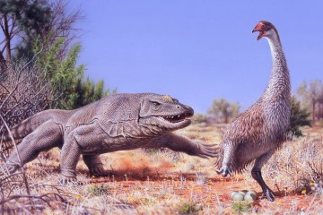 Megalania attacking a Bullockornis nest - Monash University Gippsland