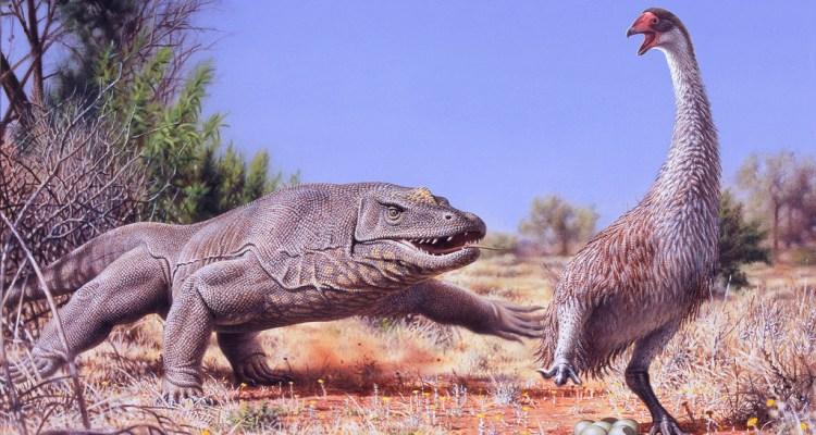 Megalania attacking a Bullockornis nest - Monash University Gippsland