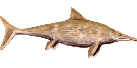 Stenopterygius