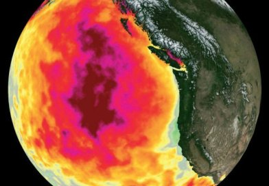 That Pacific anomaly 'blob' now has a distinct cost on animals, not just weather