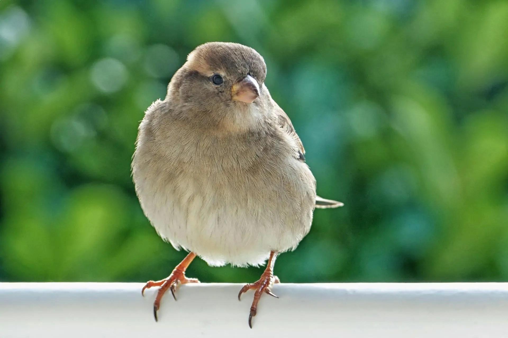 Top 12 Best Singing Birds In The World