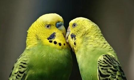Smartest Talking Bird