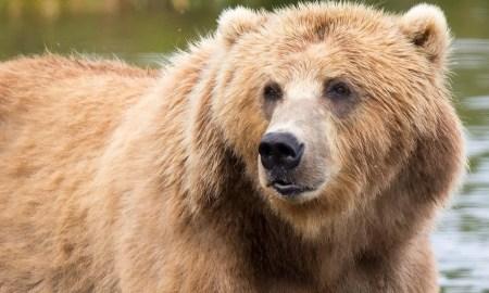 Heaviest Animals