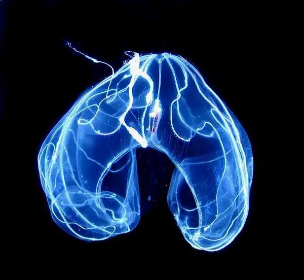 bioluminescent animals