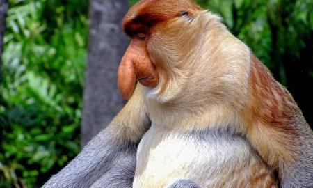Weirdest Looking Animals