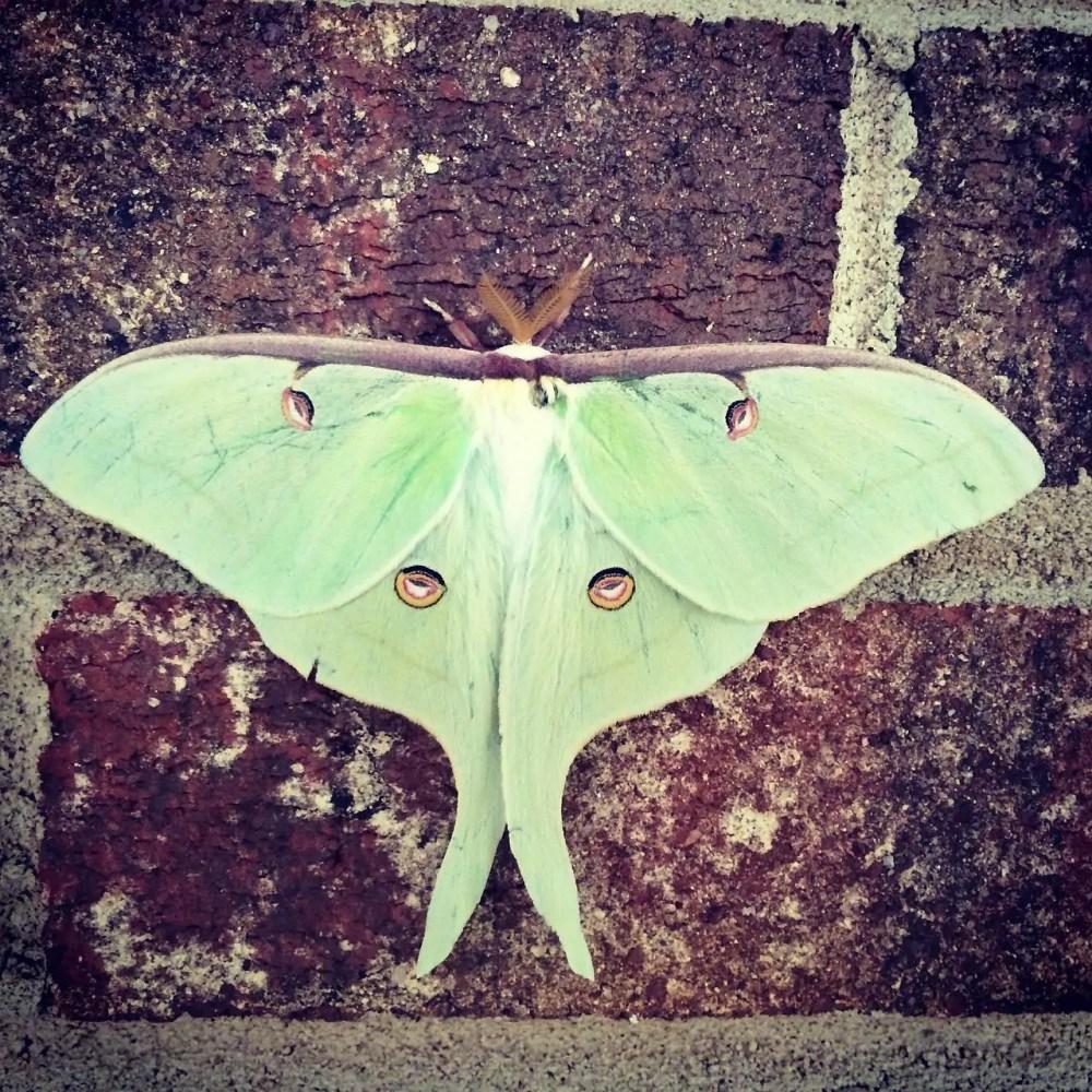 Moth Species