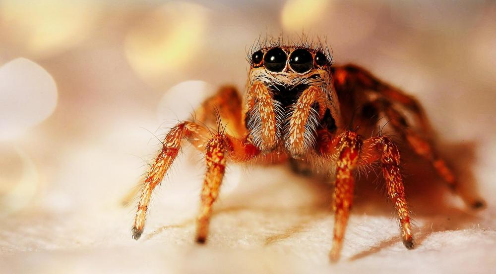 Scariest Spiders