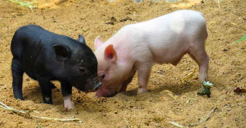 Top 10 Domestic Animals In The World
