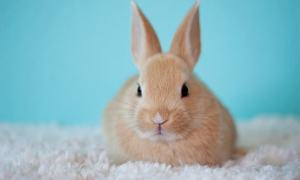 Do You Know how a Happy Bunny Rabbit Binky looks like?