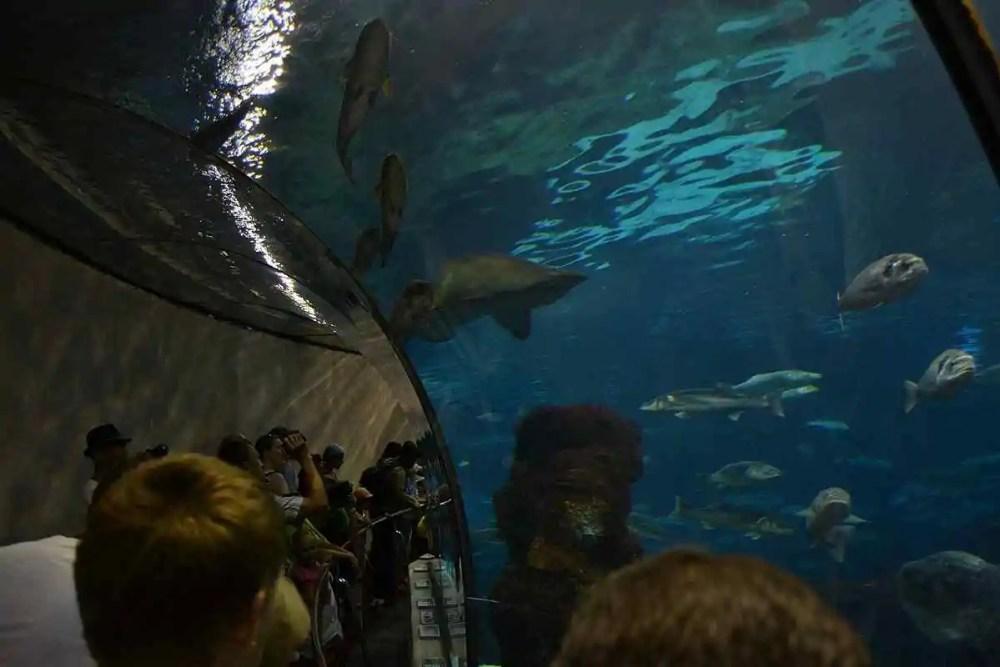 Aquarium Barcelona, Barcelona, Spain