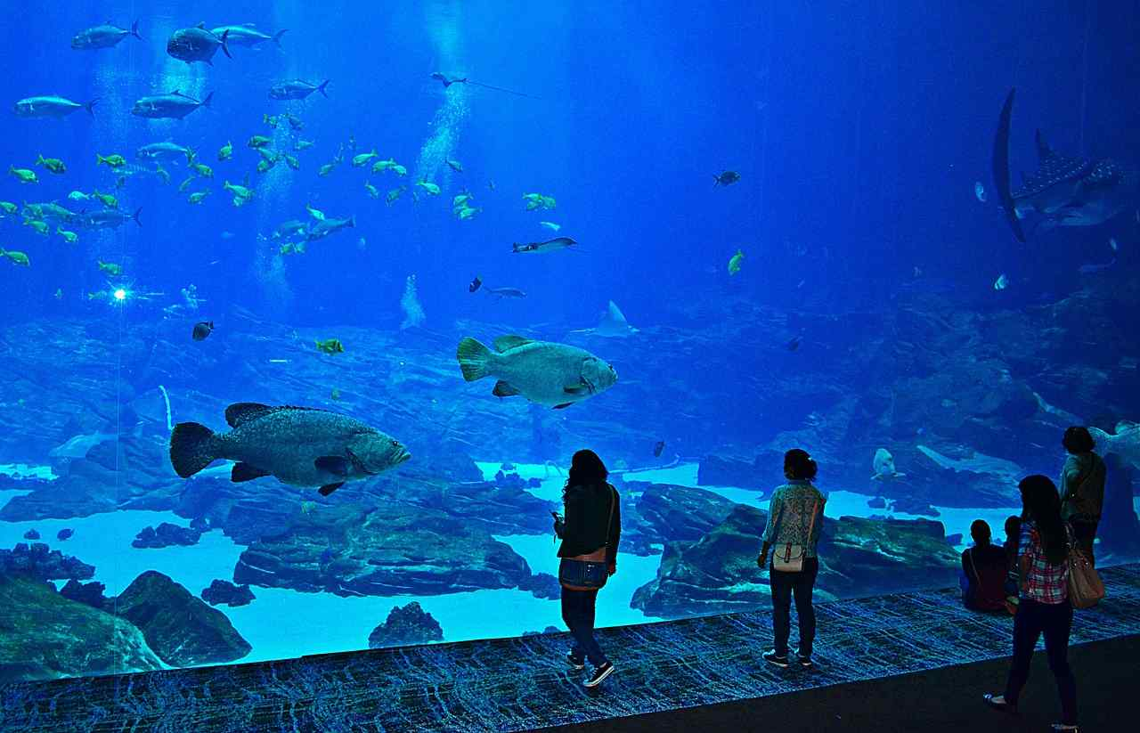 10 Best and Largest Aquariums in the World 2018
