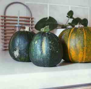 Root vegetables for vegan pantry