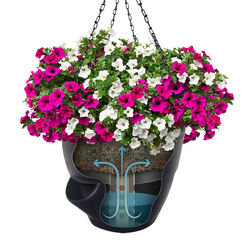 Easiest Hanging Plants