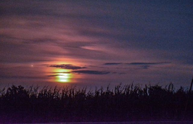 Clouds with bright, smudged moon and one red dot close to it above line of silhouetted tall grass.