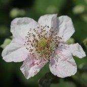 160607 CathaysCem biodiversity (7)