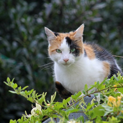 160619 welsh cats (10)