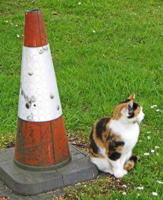 160619 welsh cats (2)