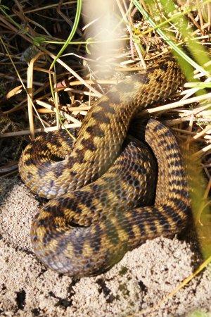 160818 reptile ramble (2)