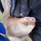 161020-international-sloth-day-2