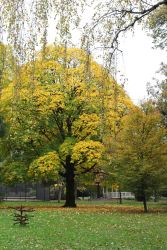 161101-golden-autumn-11