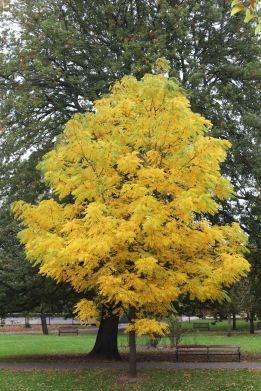 161101-golden-autumn-3