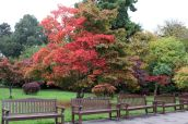 161113-roath-park-autumn-1