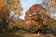 161113-roath-park-autumn-8