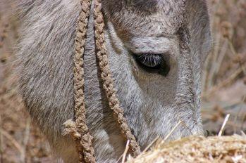 161116-donkeys-peru-7