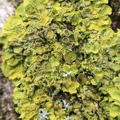 170228-lichen-6