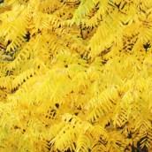 170305-yellow-1