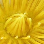 170305-yellow-8