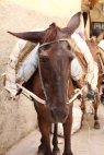 170412 Moroccan donkeys horses mules (7)
