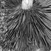 170416 2 mushroom