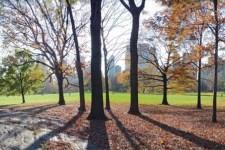 centralpark 225x150 Reading List
