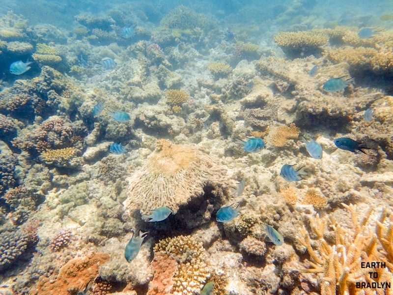 Coral is important for marine life. Coral reefs are full of complex invertebrates which have carbonate exoskeletons.
