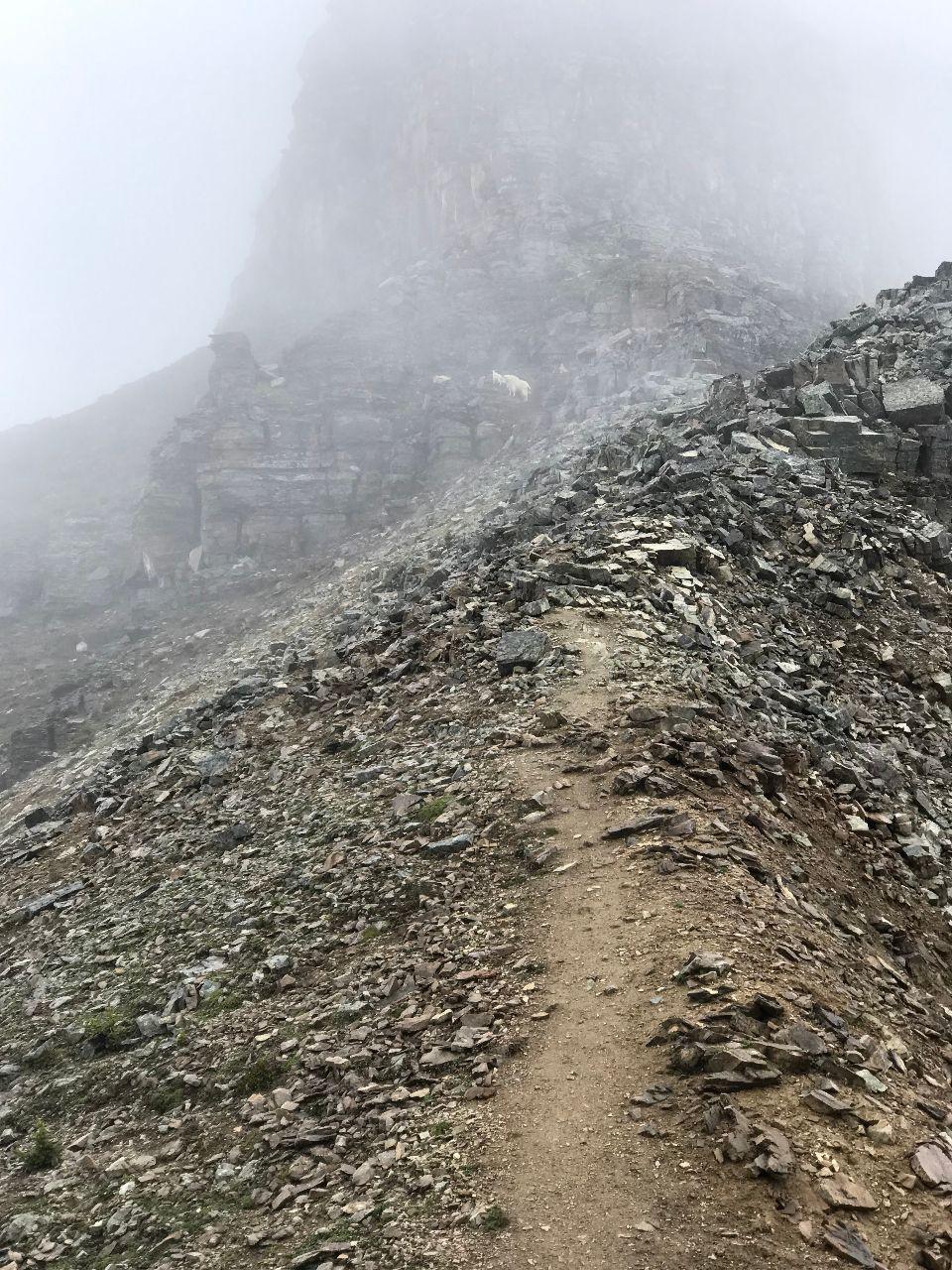 Big Horn Sheep on Devil's Thumb Trail