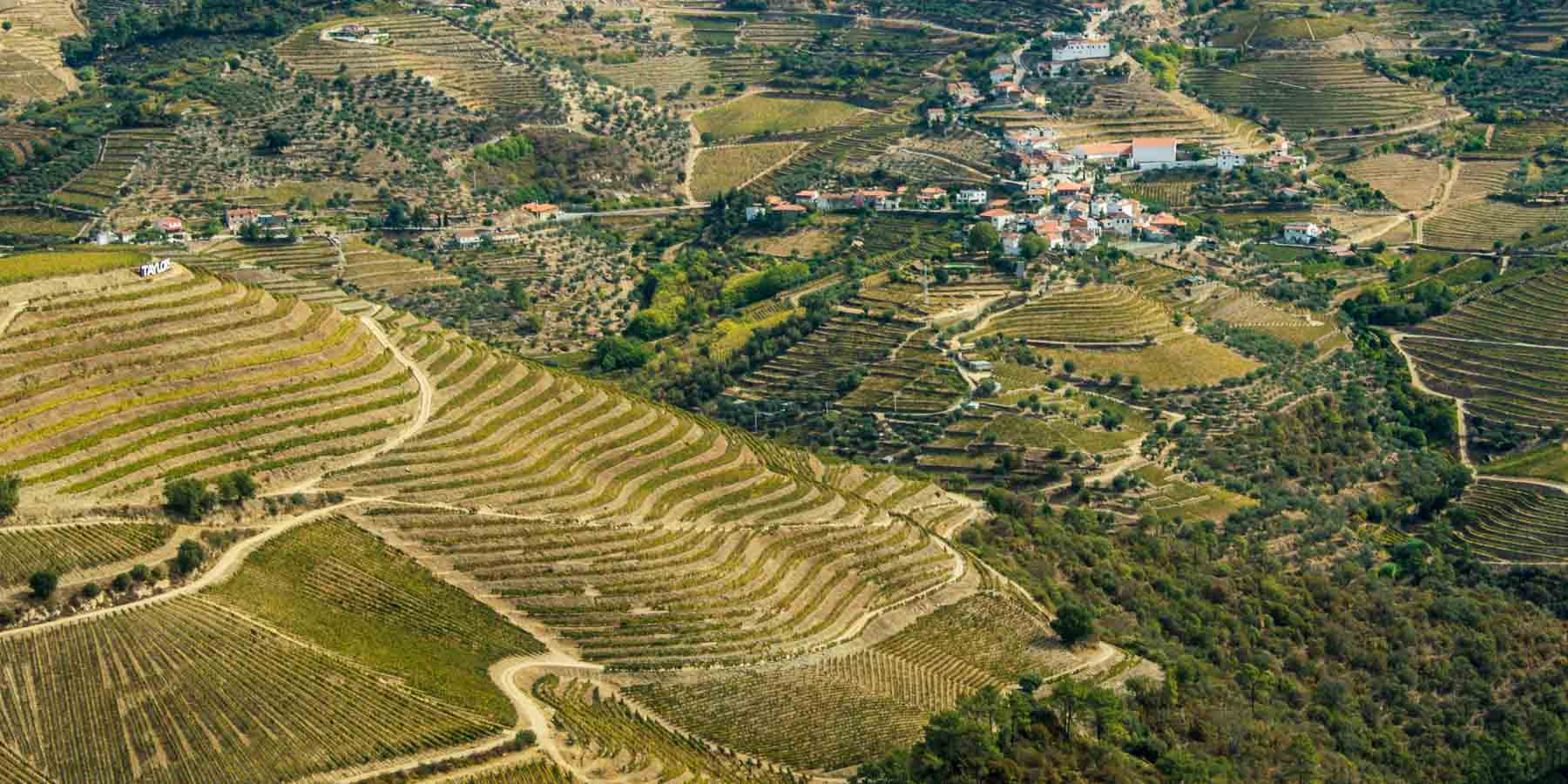 Renting a car in Portugal can be exciting driving on these little roads through vineyards.