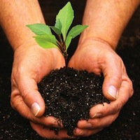 Plant trees for carbon offset