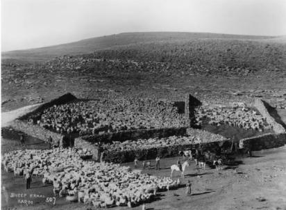 Sheep Kraaling in the Karoo.png