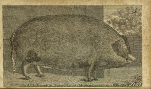 Robert Henderson, 1811.jpg