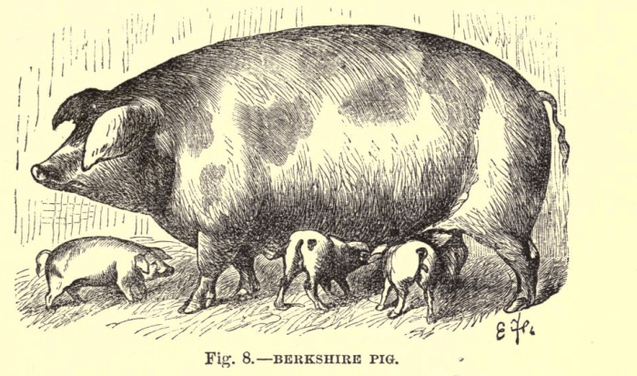 Pig 2.3.png