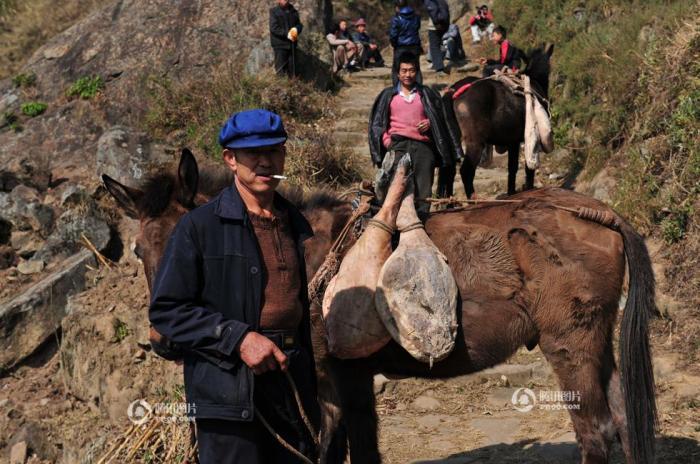Xuanwei 10