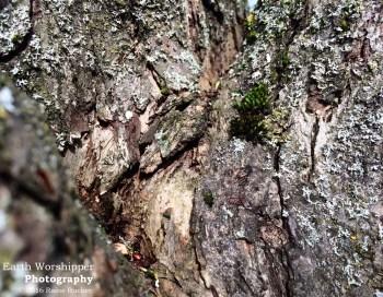 Tree Bark I