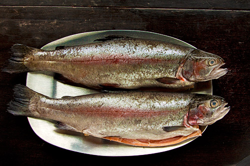 Farmed Pink Trout