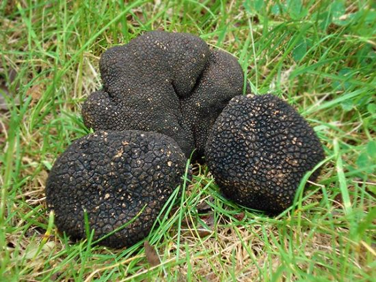 Summer Truffles in the Grass