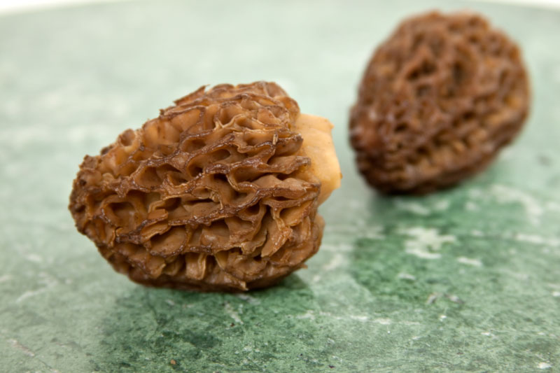 Washed Morels