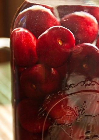Fresh cherries infusing in vodka