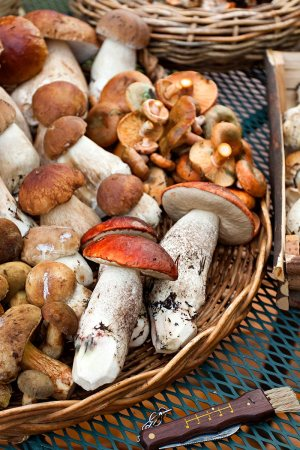 A Medley of Wild Mushrooms